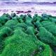 Суспензия хлореллы для растений: эффективность и правила использования