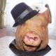 Свиная голова: особенности, свойства и приготовление