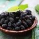 Свойства сушеных ягод шелковицы и советы по их употреблению