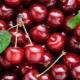 Вишня: польза и вред, калорийность и состав