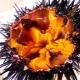 Икра морского ежа: польза и вред, как готовить и хранить?