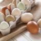 Каким бывает цвет куриных яиц и от чего он зависит?