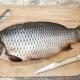 Карп: виды и свойства, калорийность и применение