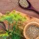 Лечебные свойства и особенности употребления семян укропа