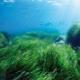 Морские водоросли: особенности, виды и сферы применения
