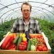 Особенности выращивания овощей