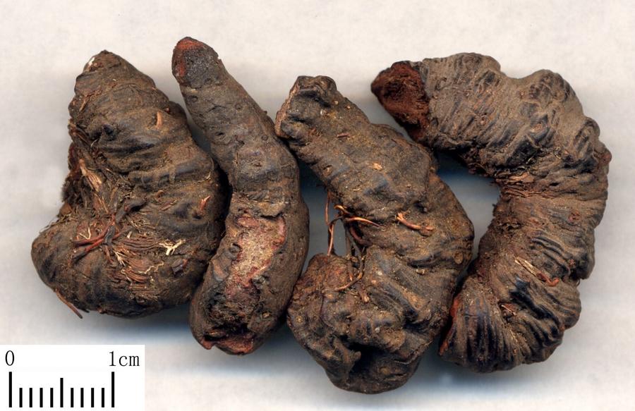 средство от кишечных паразитов человека