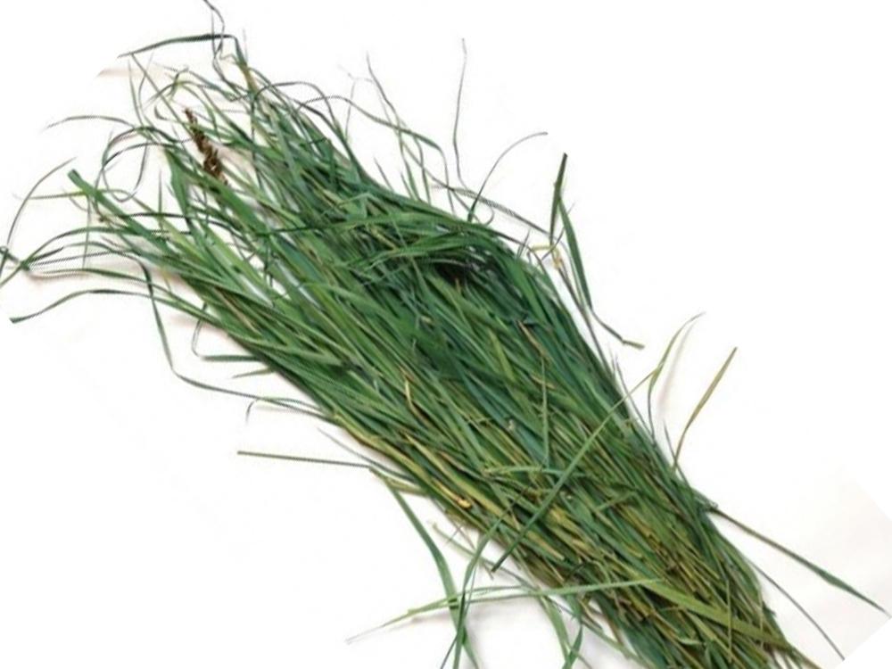 Трава зубровка фото где растет