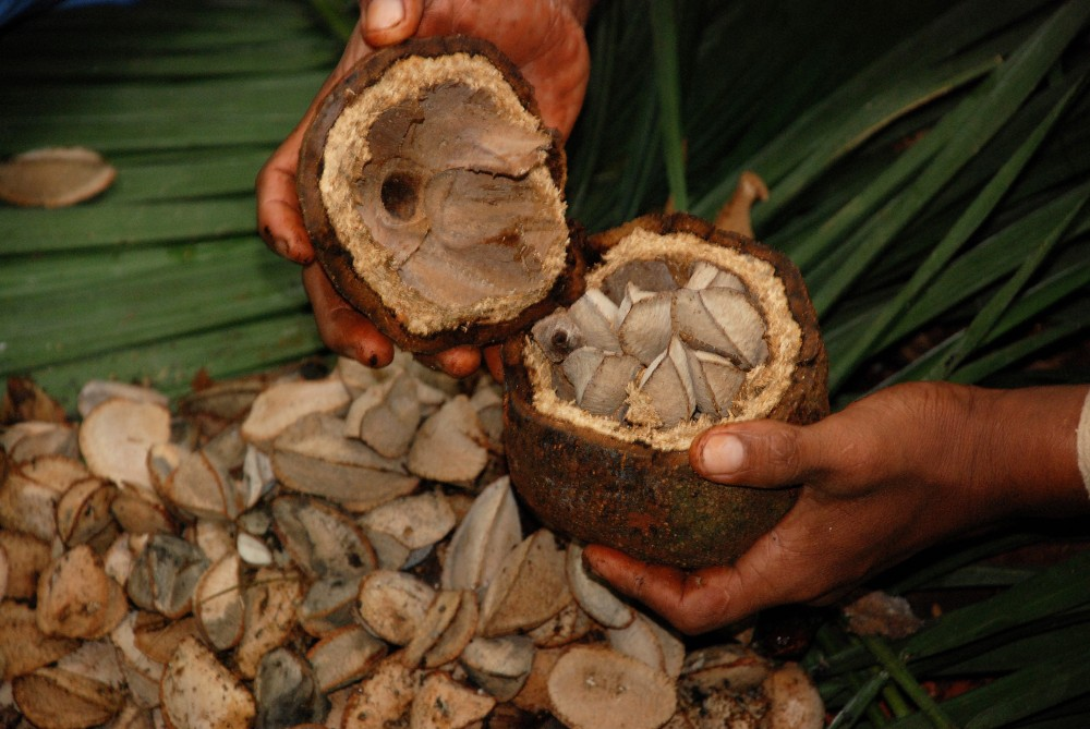 Почему нельзя много есть бразильский орех