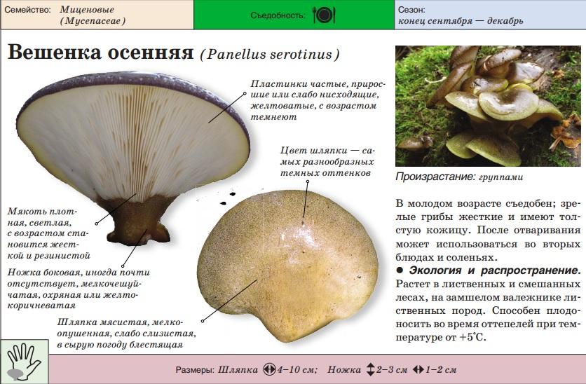Минскин