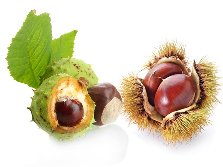 Плоды конского каштана съедобны