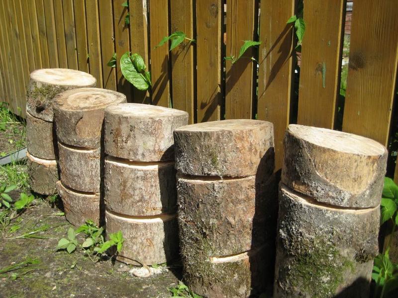Выращивание грибов на садовом участке для новичков 36