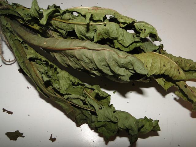 Листья одуванчика полезные свойства
