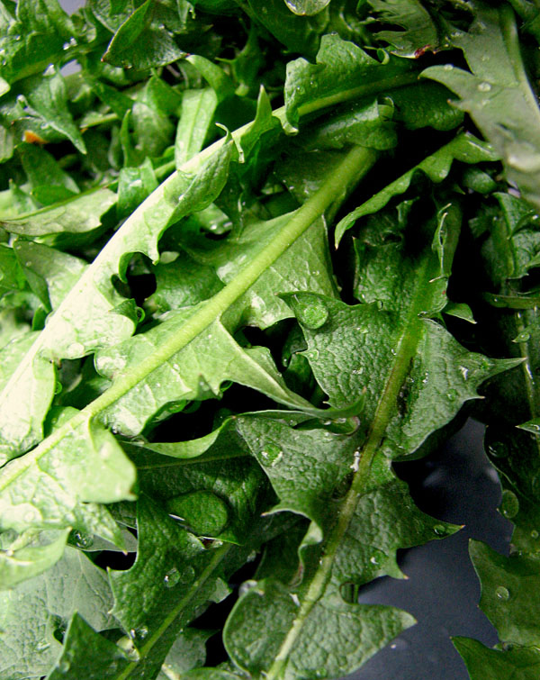 Листья одуванчика полезные свойства и противопоказания