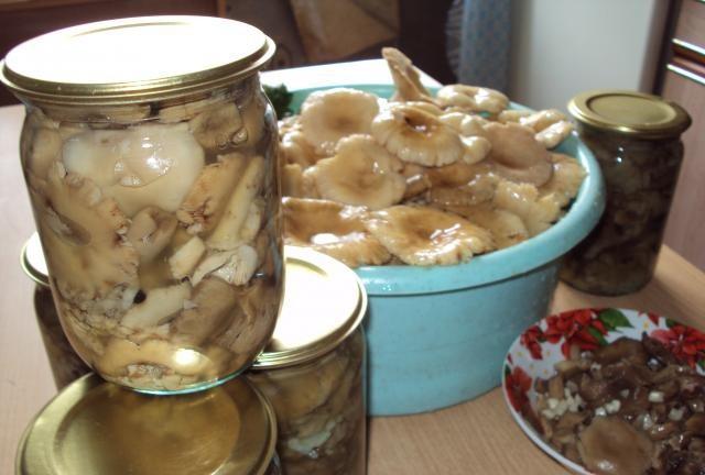 сыроежки на зиму рецепты приготовления с фото