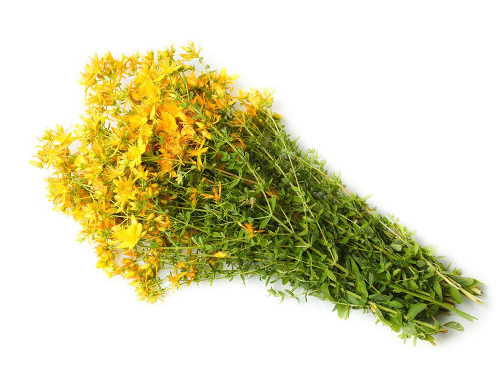 Что лечит трава зверобой лечебные свойства и противопоказания