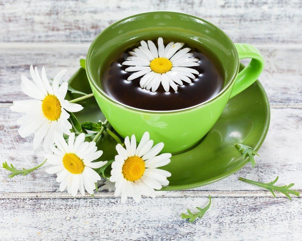 Укроп душистый обыкновенный полезные и лечебные