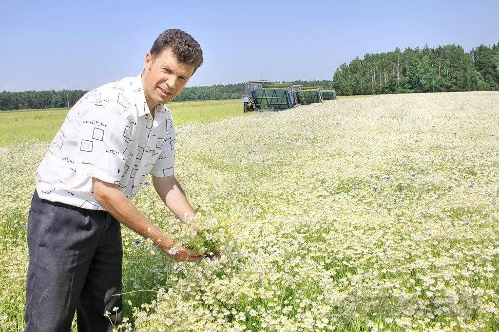 Бизнес на выращивании лекарственных растений 25