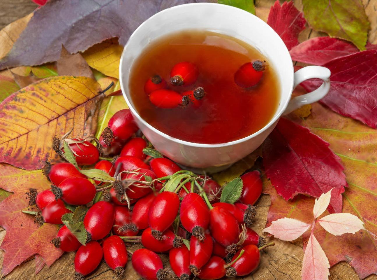 Чай из шиповника: полезные свойства и противопоказания