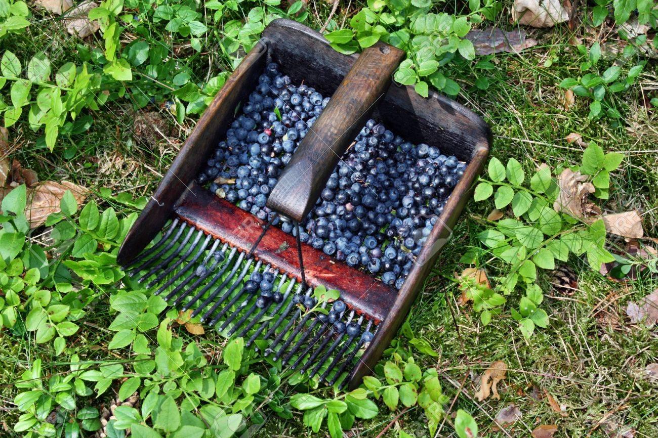 Совок для сбора ягод, сделанный из пластиковой бутылки - Doit 61