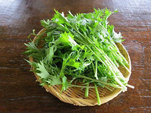 Капуста японская изумрудный узор выращивание 75