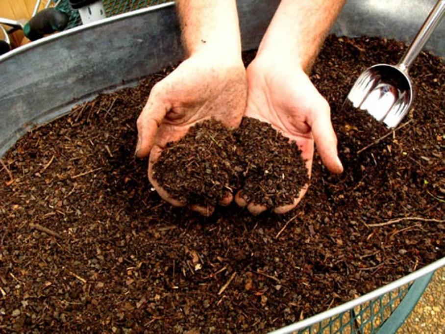 Капуста японская изумрудный узор выращивание 57