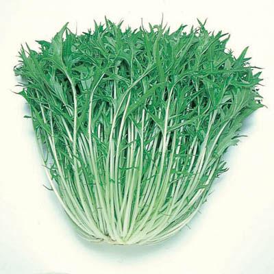 Капуста японская изумрудный узор выращивание 51