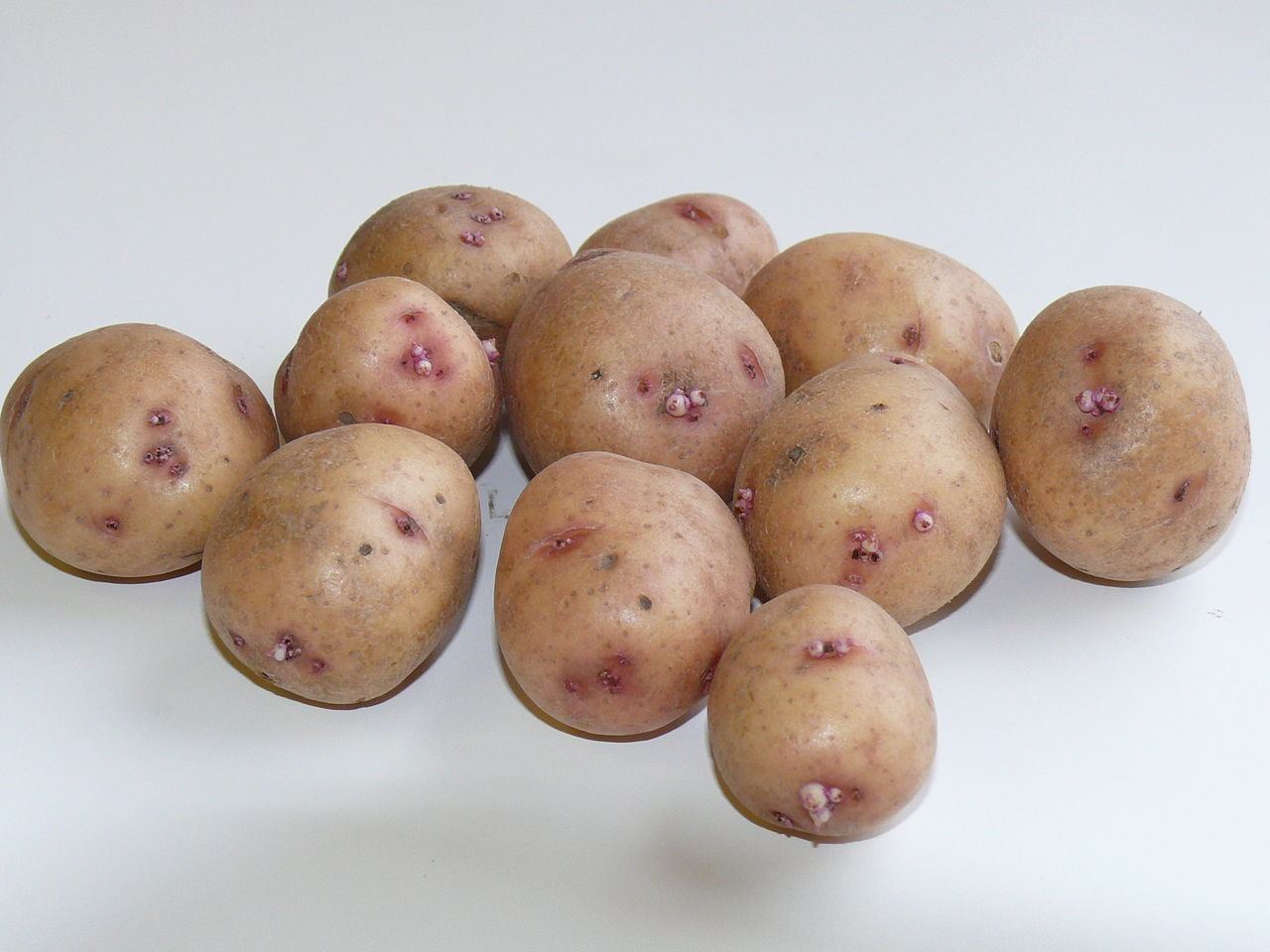 Картофель аврора описание сорта фото отзывы