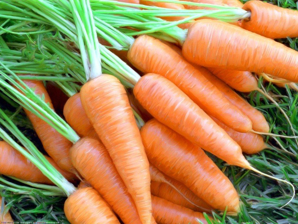 После чего сажать морковь в открытый грунт