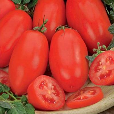Томат челнок характеристика и описание сорта помидоров