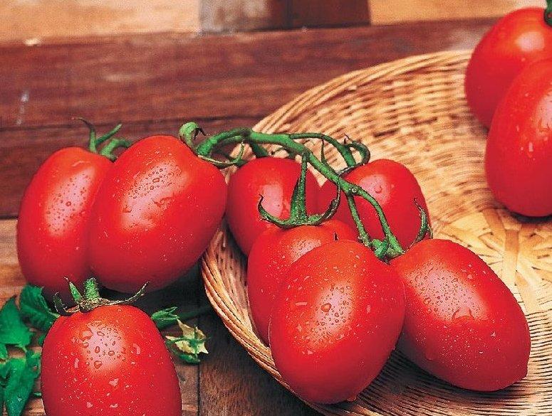 аватан отлично томат рио гранде отзывы и фото именно поэтому