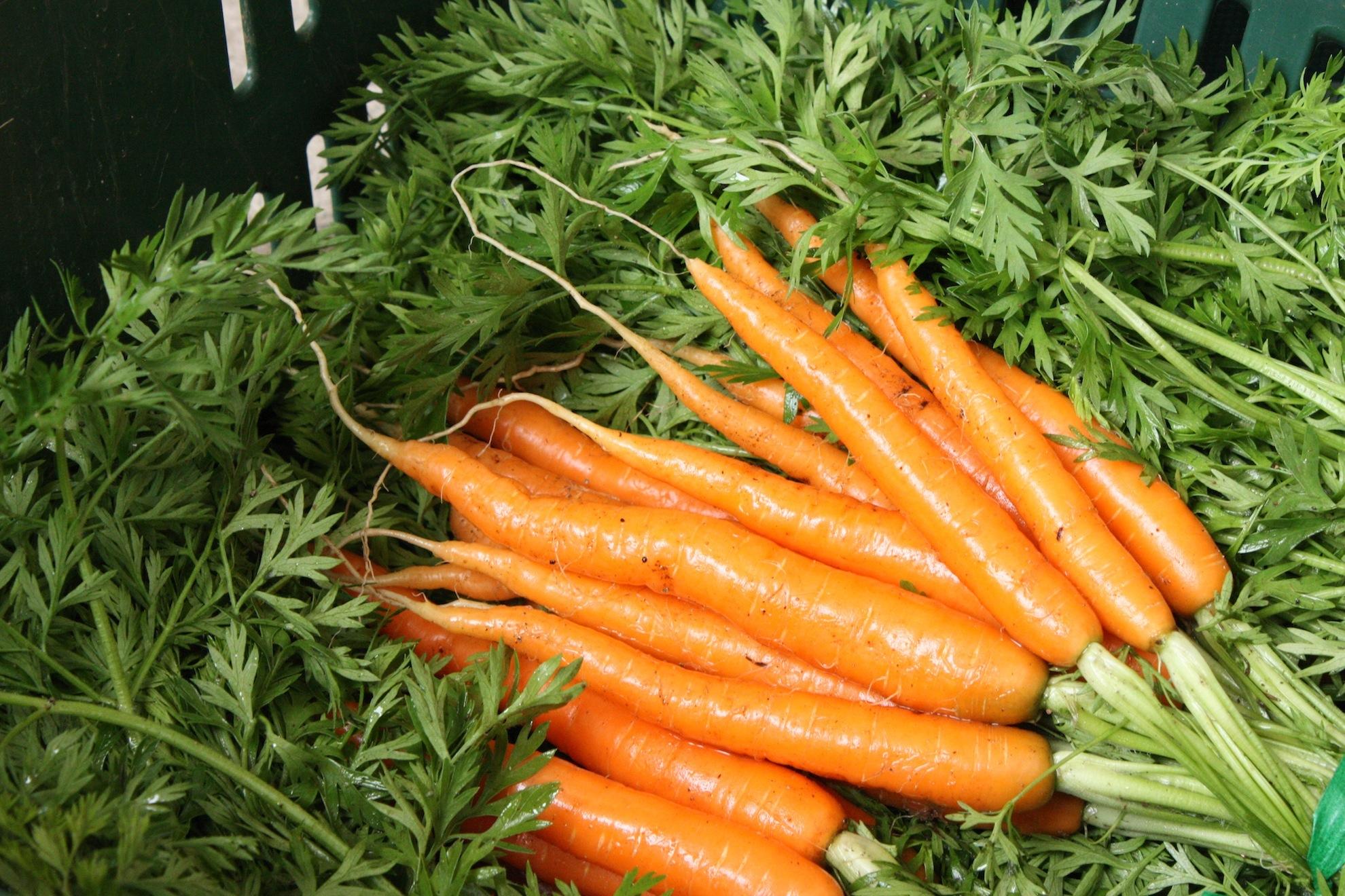 Сколько дней всходят семена моркови