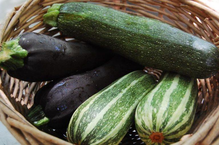 Чем отличаются кабачки от цукини: в чем заключается разница между овощами