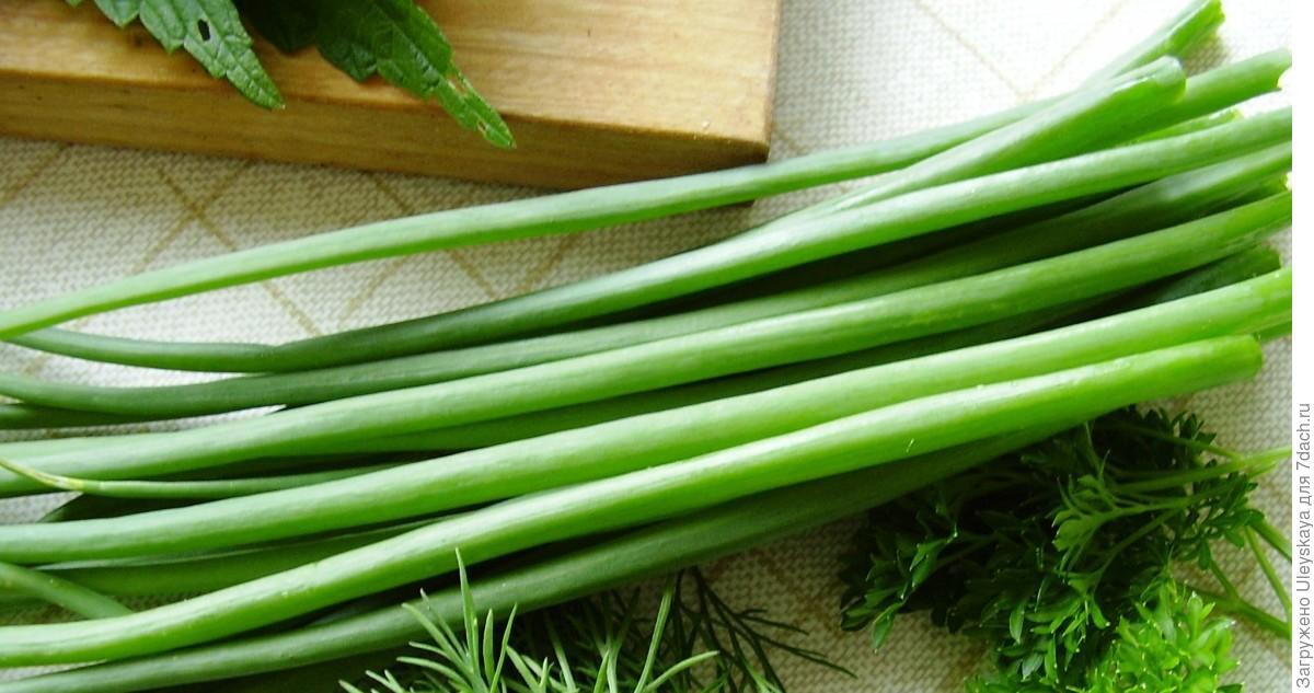 Зеленый лук как сохранить рецепт 9