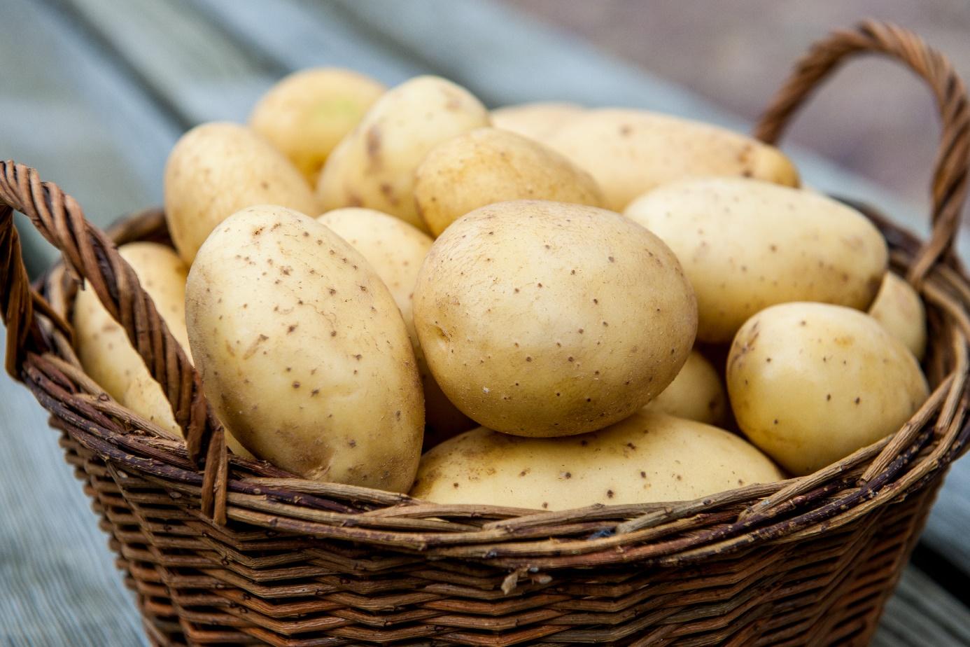 Сырой и вареный картофель польза и вред для пищеварения