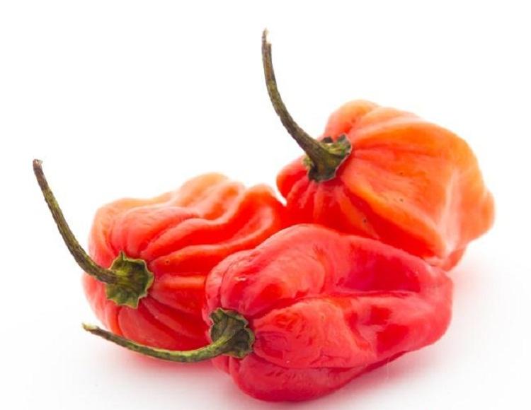 Перец Хабанеро: как выращивать и ухаживать (поливать и т.д.), в какие блюда добавлять жгучий компонент и чем он хорош