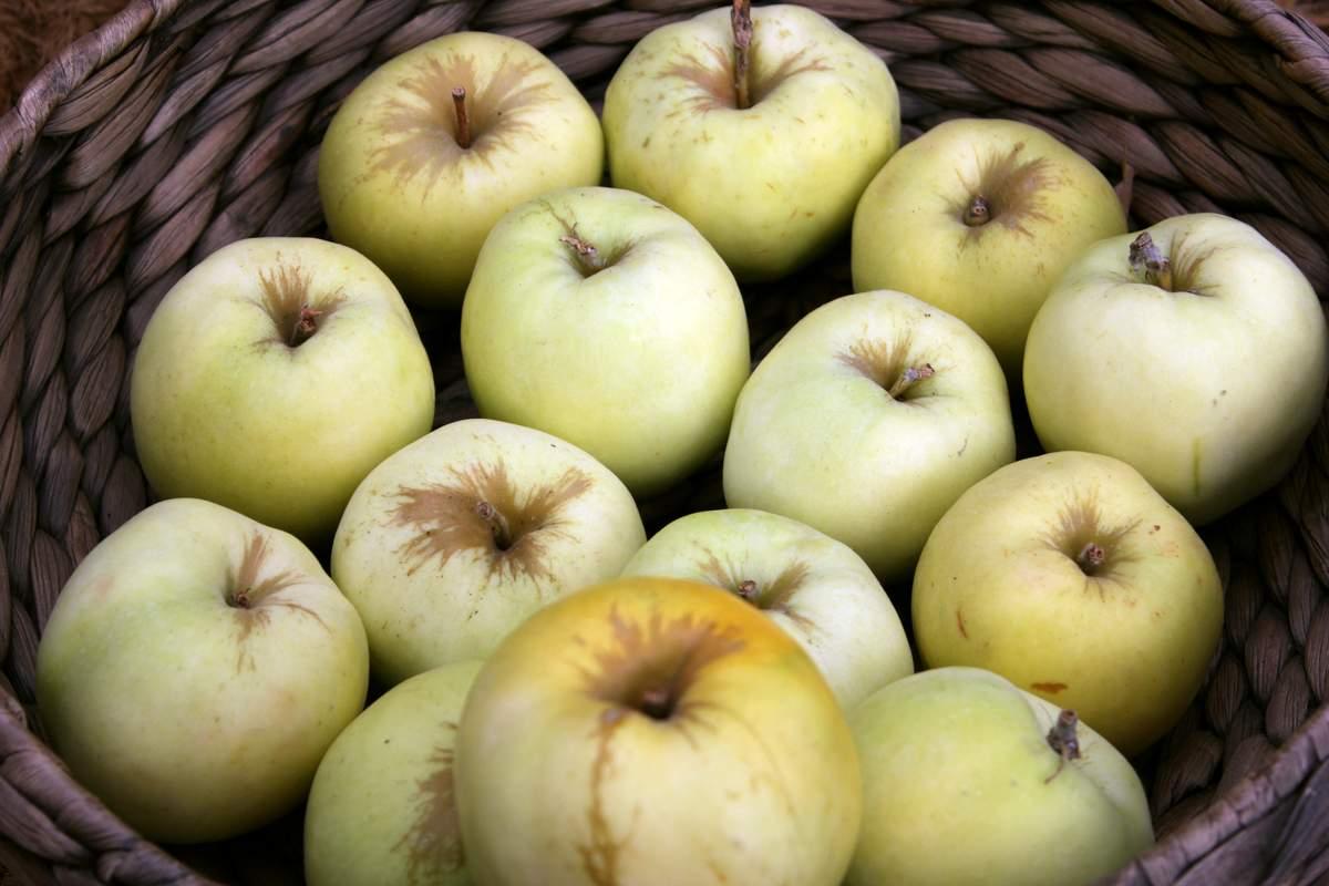 Моченые яблоки - польза или вред новые фото