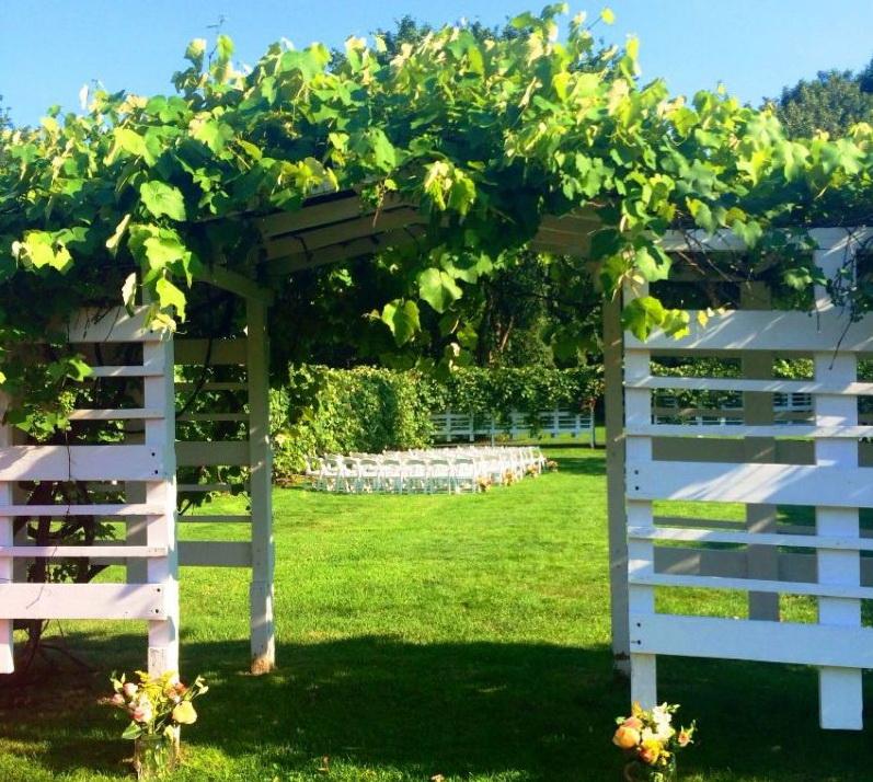 виноградник на даче своими руками