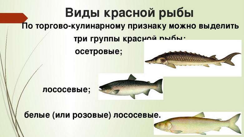 красная морская рыба названия список