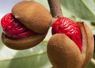 Мускатный цвет пенангский