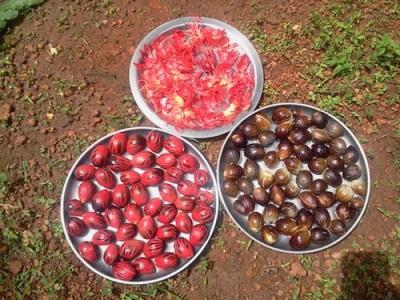 Мускатный цвет и мускатные орехи
