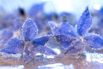 Засахаренные цветки бораго