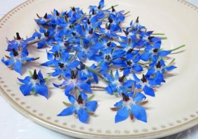 Цветки бораго