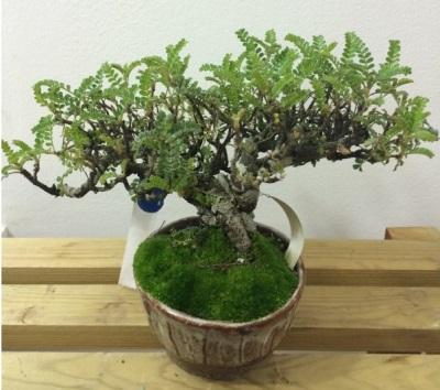 Перечное дерево