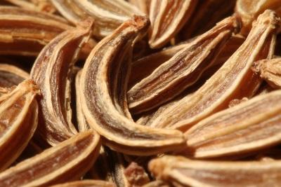 Польза семян тмина