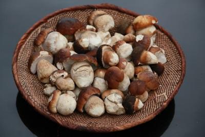 Белые грибы - много