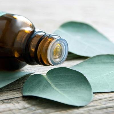 Пищевая ценность и химический состав масла эвкалипта