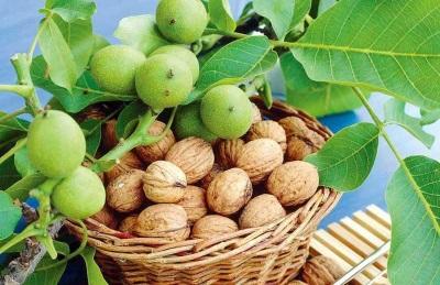 Интересные факты о грецком орехе