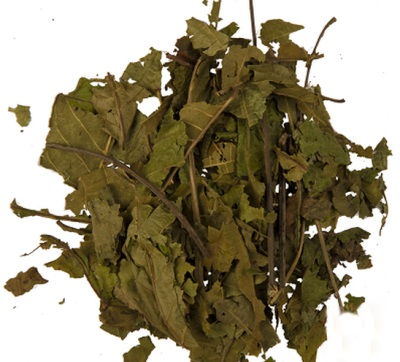 Листья грецкого ореха богаты полезными веществами и по этому используют в медицине