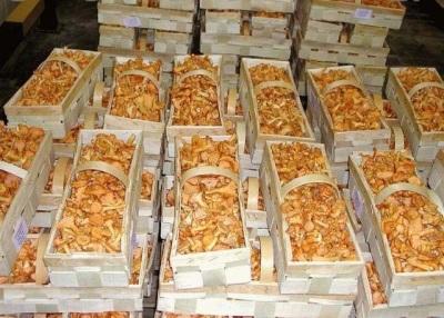 Покупка грибов лисичек